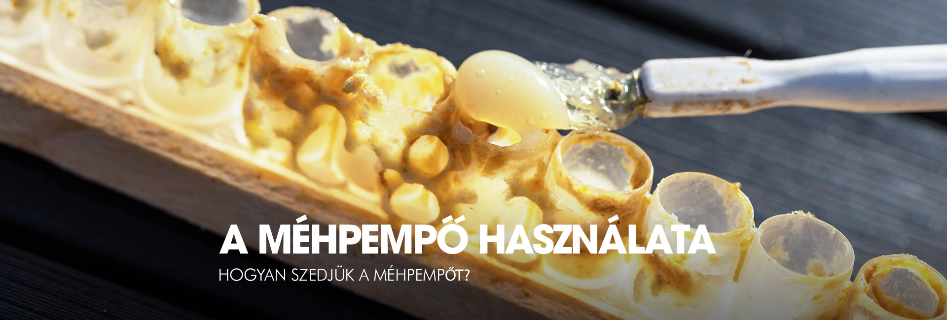 mehpempo-slider-72